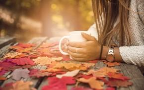 Картинка осень, листья, девушка, парк, colorful, чашка, girl, клен, wood, park, background, autumn, leaves, cup, coffee, …