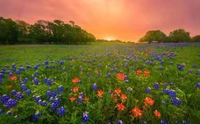 Картинка зелень, поле, лето, небо, яркие краски, солнце, лучи, деревья, закат, цветы, рассвет, поляна, весна, луг, …