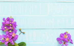 Картинка цветы, фон, дерево, голубой, доски, wood, blue, flowers, purple