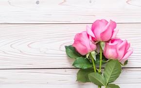 Картинка цветы, розы, розовые, fresh, wood, pink, flowers, roses