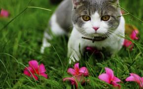 Картинка кошка, трава, кот, цветы, природа, котенок, серый, поляна, портрет, сад, мордочка, розовые, котёнок, розовые цветы, …