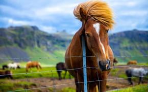 Картинка взгляд, морда, горы, природа, конь, лошадь, кони, лошади, пастбище, ограждение