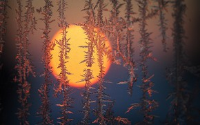 Картинка иней, стекло, солнце, узор, лёд