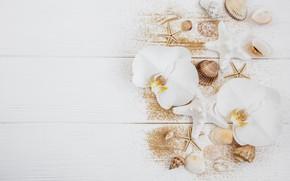 Картинка белый, цветы, стол, фон, белые, орхидеи, морские раковины, Olena Rudo