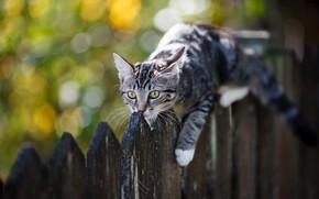 Картинка кошка, кот, котенок, забор, котёнок, боке