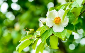 Картинка зелень, цветок, капли, зеленый, блики, фон, дерево, куст, ветка, весна, цветение, сочная, боке