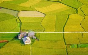 Картинка поля, вид сверху, ферма, Vietnam, Aerial view of Bắc Sơn valley, Lạng Sơn