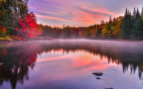 Обои осень, деревья, туман, озеро