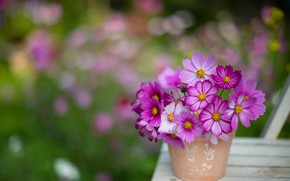 Картинка цветы, яркие, букет, размытие, горшок, боке, композиция, космеи