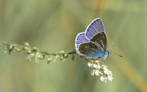 Картинка лето, бабочка. настроение, макро flowers природа