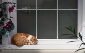 Картинка Cat, Window, Sleep