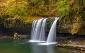 Картинка осень, лес, берег, листва, водопад, хвоя, брёвна