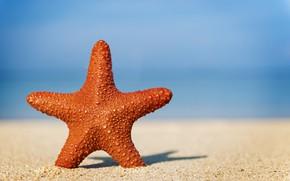 Обои песок, море, волны, пляж, лето, берег, звезда, summer, beach, sea, sand, marine, starfish