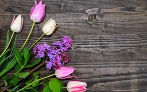 Картинка тюльпаны, wood, pink, flowers, сирень, tulips, spring, lilac