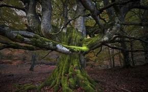 Картинка лес, дерево, мох