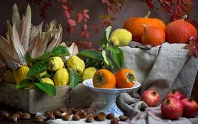 Картинка темный фон, еда, кукуруза, тыквы, посуда, фрукты, натюрморт, композиция, айва, хурма