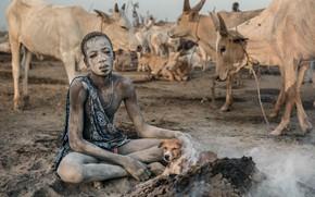 Картинка человек, собака, скот, Terekeka, South Sudan