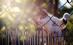 Картинка кошка, свет, котенок, сетка, забор
