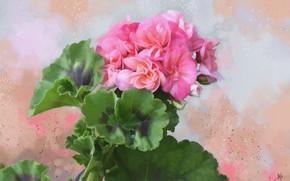 Картинка листья, фон, текстура, цветки, Герань