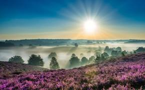 Картинка солнце, деревья, туман, рассвет, утро, Нидерланды, вереск