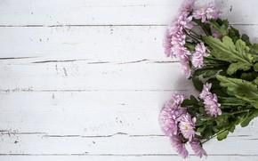Картинка цветы, фон, розовые, хризантемы, wood, pink, flowers, violet