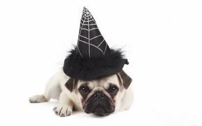 Картинка друг, собака, шляпа