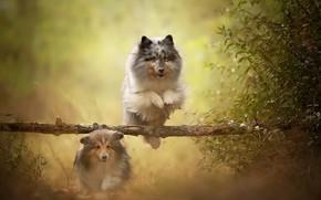 Картинка собаки, лето, природа