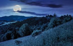Картинка лес, небо, деревья, горы, ночь, луна, звёзды, домики