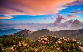 Обои зелень, облака, пейзаж, цветы, горы, природа, туман, синева, холмы, склоны, вершины, красота, весна, утро, Азия, ...