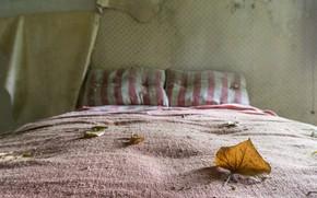 Картинка лист, кровать, натурализм