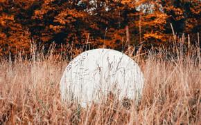 Картинка осень, трава, деревья, природа, шар