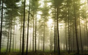 Картинка лес, свет, деревья, ветки, природа, туман