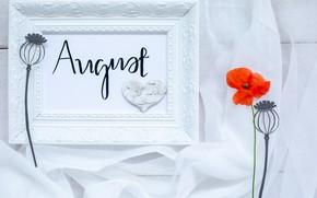 Картинка мак, рамка, август