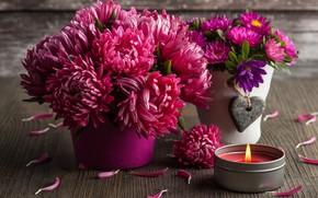 Картинка цветы, букет, красная, хризантема, IRINA BORT