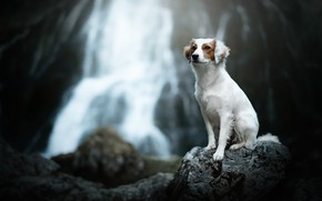 Картинка камень, водопад, собака, боке