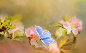 Картинка макро, цветы, бабочка, обработка, ветка, весна, арт, розовые, живопись, цветение, голубая, мазки, фотоарт