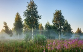Картинка лето, деревья, пейзаж, природа, туман, утро, травы, берёзы