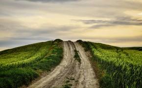 Картинка поле, природа, дорога в небо