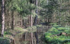 Картинка дорога, зелень, лес, трава, вода