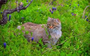 Картинка Взгляд, Кошка, Cat