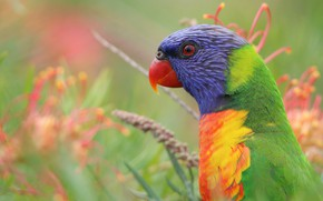 Картинка взгляд, цветы, яркий, природа, зеленый, фон, птица, портрет, попугай, профиль, лори