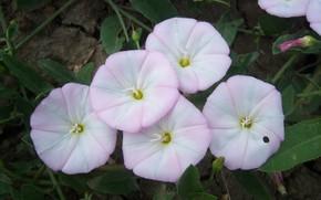 Картинка цветы, белые, полевые, Meduzanol ©