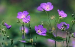 Картинка поле, цветы, боке