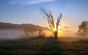 Картинка поле, трава, солнце, свет, туман, дерево, рассвет, холмы, утро, сухое