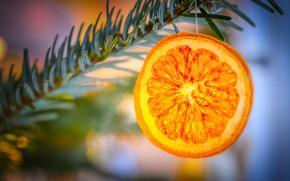 Картинка зима, свет, оранжевый, яркий, праздник, апельсин, размытие, ветка, долька, Рождество, Новый год, хвоя, висит, боке, …