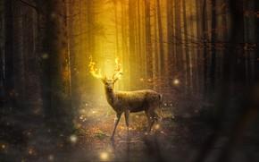 Картинка лес, деревья, ночь, огонь, олень, огоньки, фэнтези, рога