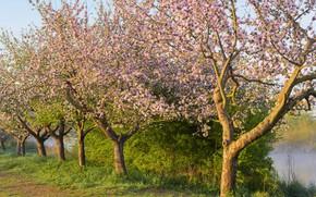 Картинка трава, солнце, деревья, ветки, весна, сад, цветение, цветки