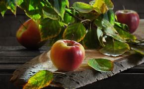 Картинка ветка, листья, доски, фрукты, яблоки, Сергей Фунтовой