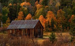 Картинка осень, лес, деревья, сарай, Калифорния, США, Hope Valley