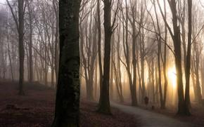 Картинка дорога, осень, лес, листья, девушка, солнце, лучи, свет, деревья, ветки, туман, парк, восход, дерево, настроение, …